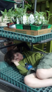 Calvin taking a nap at the garden nursery....