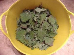 Final harvest from kale planted in community garden plot last fall