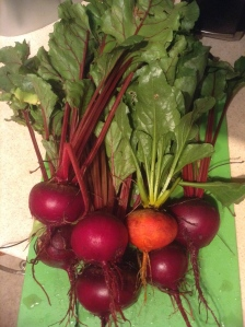 Beets harvested from community garden plot