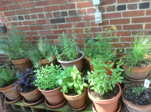Herbs in patio garden