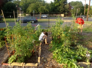 Calvin weary of tending the community garden plot.
