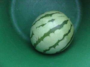 Planted watermelon this year.  Happy results.