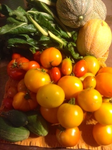 Swiss chard and lots of tomatoes.