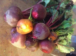 Last beet harvest of the season.